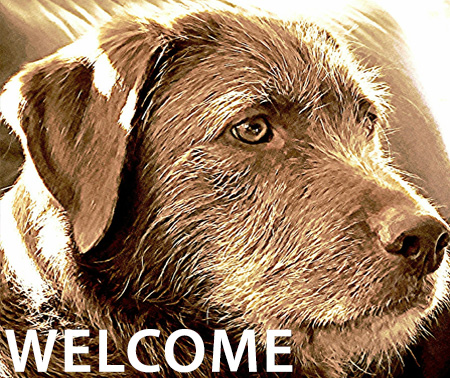 welcome-dog-buddy